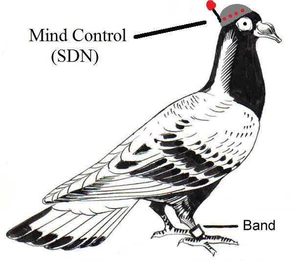 SDN for IPoAC